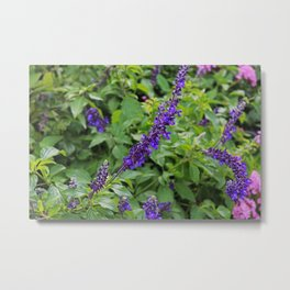Indifference in Purple Metal Print