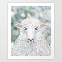Corriedale sheep farm animal portrait Art Print