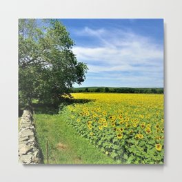 Buttonwoods sunflower fields by Jéanpaul Ferro Metal Print