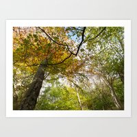 Autumn forest 1 Art Print