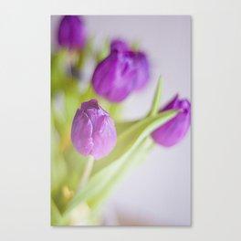 Tulipanes morados.  Canvas Print