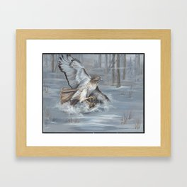 red tailed hawk hunting in the snow karla hall Framed Art Print