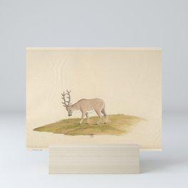 French Vintage Print - The Animals of China (1787) - 37 Mini Art Print