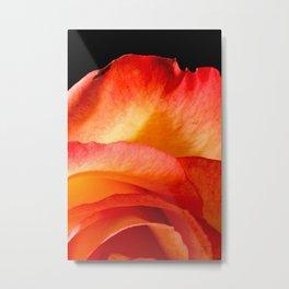 Rosa Aurora Metal Print