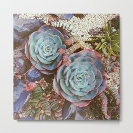 Neighborhood Succulents 2 Metal Print