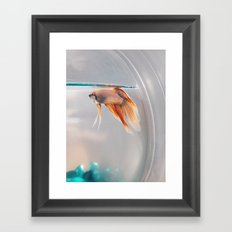 Fish in a fishbowl Framed Art Print