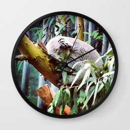 Kozy Koala  Wall Clock