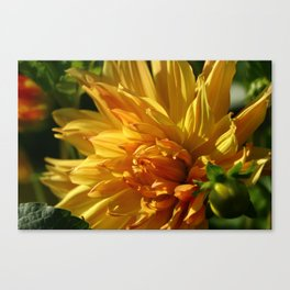 On The Bright Side Canvas Print