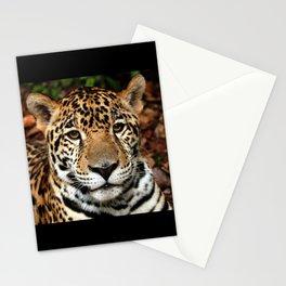 Belizean Jaguar Photograph Stationery Cards