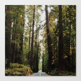 Avenue of the Giants Road Canvas Print