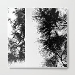 Mediterranean black and white pine tree Metal Print