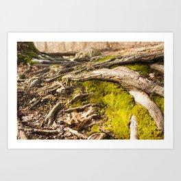 Moss & Roots Art Print