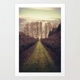 Apple Orchard At Dusk Art Print