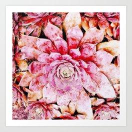 Hens & Chicks Succulents Mini iv Art Print