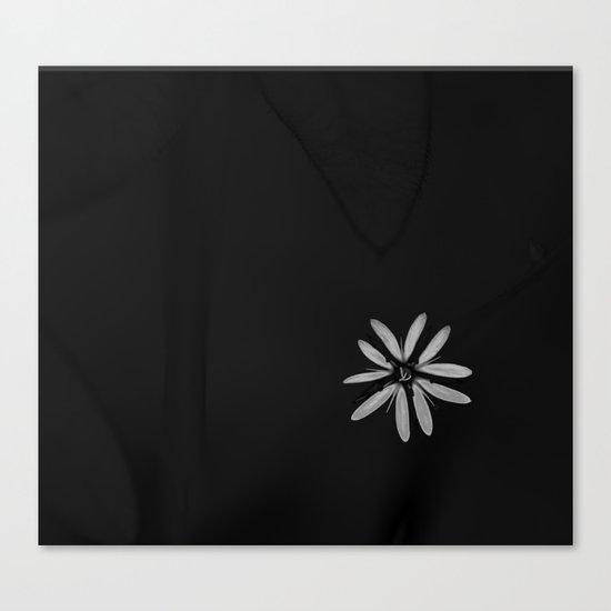 One Tiny White Flower on Black Background Canvas Print