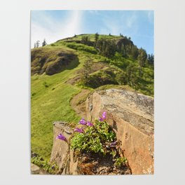 Saddle Mountain Oregon Coast Nature Northwest Forest Landscape Hiking Poster