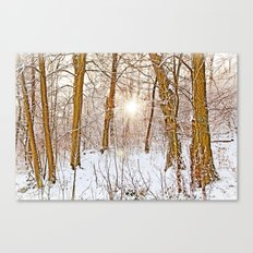 Sunshine in the snowy forest Canvas Print