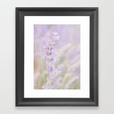 Lavanda Framed Art Print