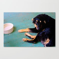 Dog | Rudy Canvas Print