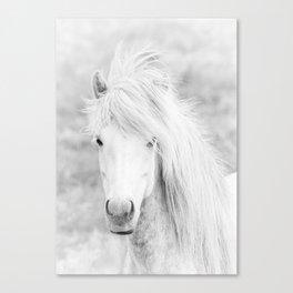 Wild Free White Horse, Animal Wall Art, Horse Wall Art, Horse Photography Canvas Print