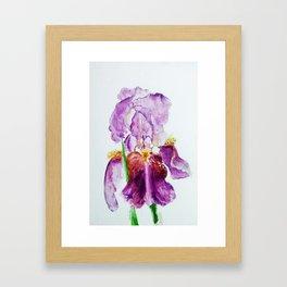 Pinky Purple Iris Bloom watercolor by CheyAnne Sexton Framed Art Print