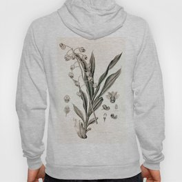 Catasetum hookeri Hoody