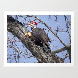 Pileated Woodpecker Art Print