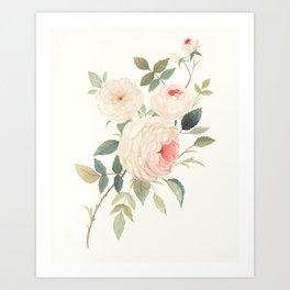 A Rose for William Morris Art Print