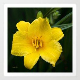 Yellow Daylily Flower Art Print