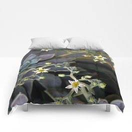 Twinkle, Twinkle, Succulent Stars Comforters