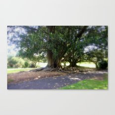 Bare Rooted Canvas Print