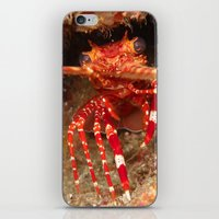lobster iPhone & iPod Skins featuring Lobster by Lisa Johnson Cohen