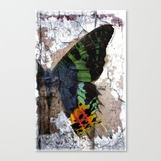 Sunset Moth Wing Abstract Canvas Print