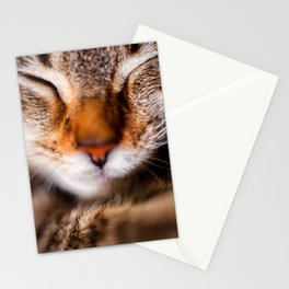Peaceful Kitten Nap Stationery Cards