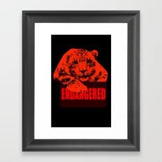 Endangered Snow leopard Framed Art Print