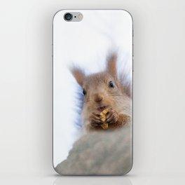 Squirrel with a walnut iPhone Skin