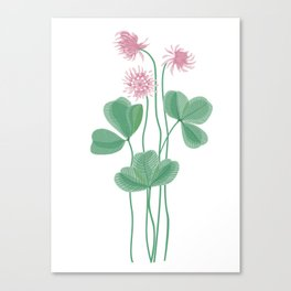 Beautiful clover with pink flowers Canvas Print