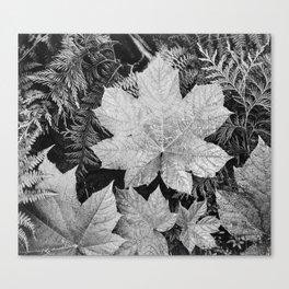 Ansel Adams - Leaves Canvas Print