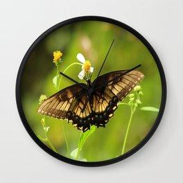 Butterfly - Everglades Wall Clock