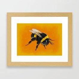 Fuzzy Bumblebee Framed Art Print
