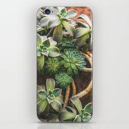 Botanical Gardens - Succulent #882 iPhone Skin
