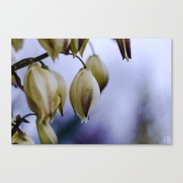 bellflower Canvas Print