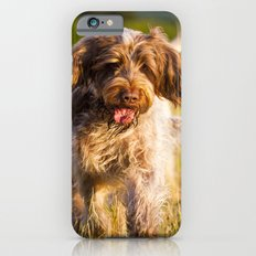 Brown Roan Italian Spinone Dog in Action iPhone 6s Slim Case