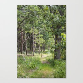 Alone in the wood Canvas Print