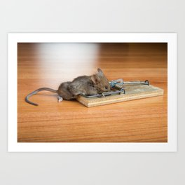 Dead Mouse in Trap Art Print