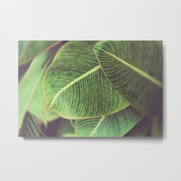 Forest, tropical, leaves, nature Metal Print