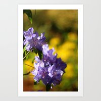 Rhododendron in a Field of Yellow Art Print