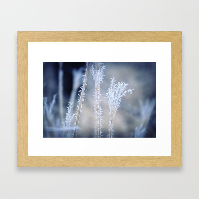 Cold Hoarfrost on the weeds in the winter Framed Art Print