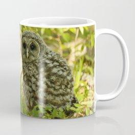 Baby barred owl first time on earth Coffee Mug