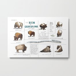 The Bison of Golden Gate Park from Meanwhile in San Francisco Metal Print